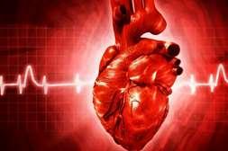 Состав Кардилайфа регулирует работу сердца.